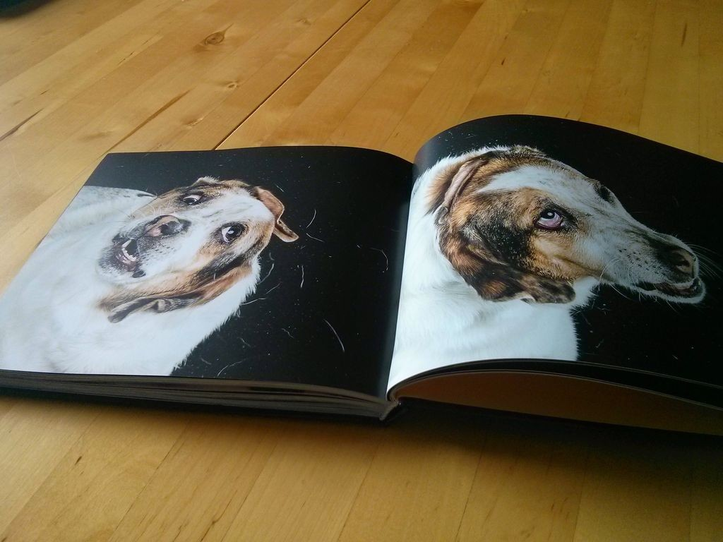 Shake Hunde geschüttelt von Carli Davidson